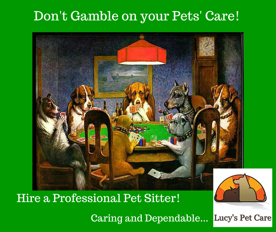 Don't Gamble on your Pets' Care!