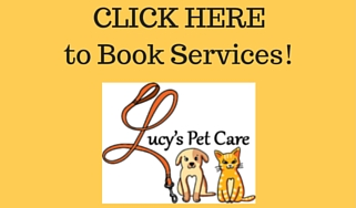 cheap pet sitters