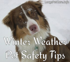 Lucy - Winter Safety PIC