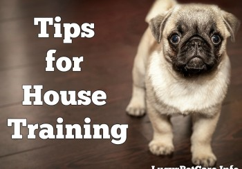 tips for house training