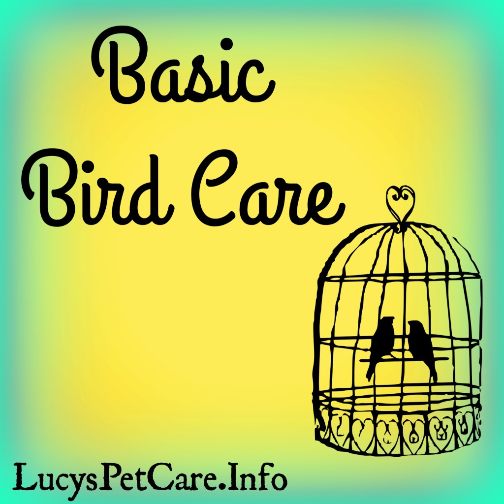 pet bird care