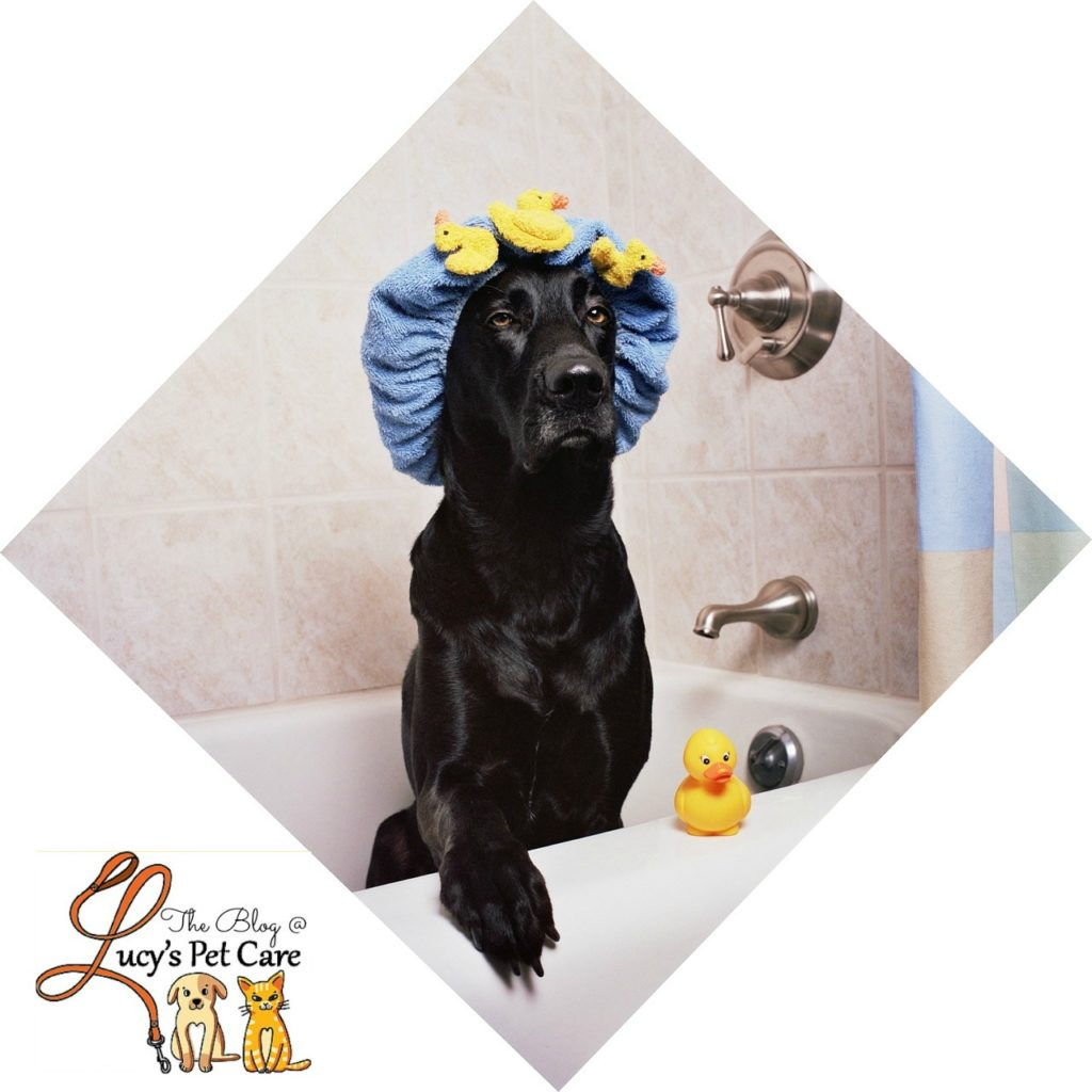 basic dog grooming tips