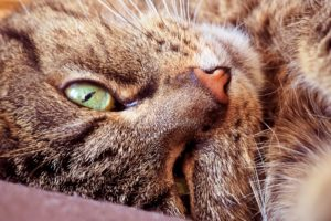 cat eyes - tools to rid your home of pet hair