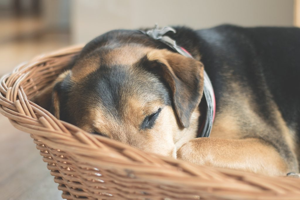 Taking Care of Your Pet When You're Not Home